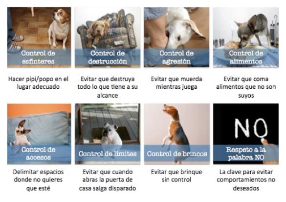 corrección de malos habitos   Corrección de Travesuras en Cachorros